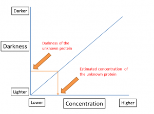 unknown protein concentration